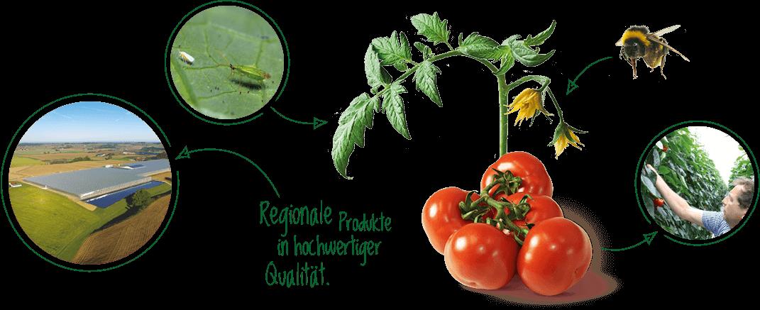Nachhaltigkeit ist bei Gemüsebau Steiner ein Top-Thema. Informieren Sie sich!