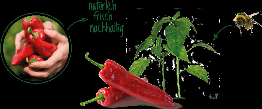 Natürlich, frisch und nachhaltig - Früchte von Gemüsebau Steiner