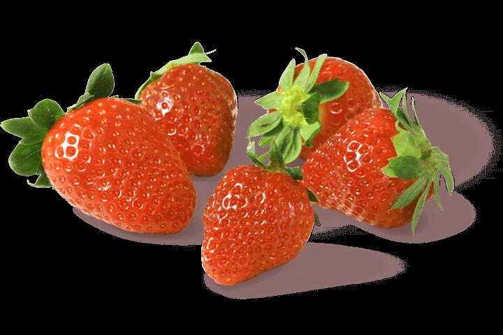 Erdbeeren-Gemuesebau-Steiner_01