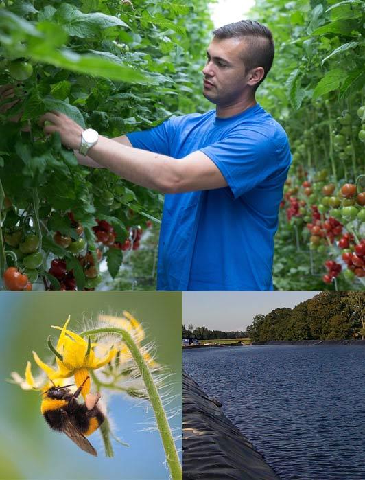 Nachhaltigkeit bei Gemüsebau Steiner: Anbau und Pflege von Hand, Bestäubung von Hummeln und ein geschlossenes Bewässerungssystem