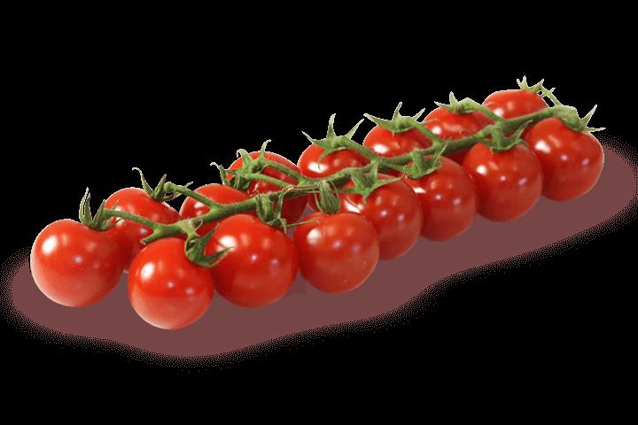Mini-Cherry-Rispe-Rivolo-Gemuesebau-Steiner_01
