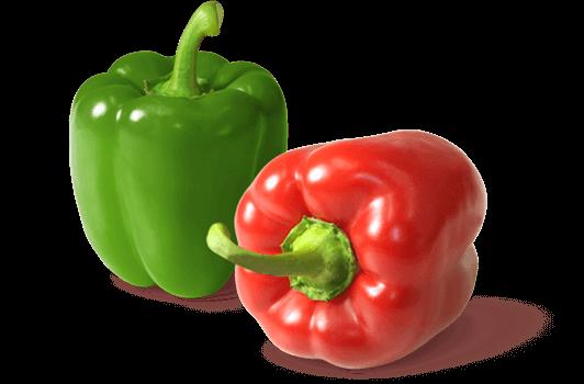 Gemüsebau Steiner setzt Nützlinge wie Schlupfwespen, Raubwanzen und Raubmilben zur Schädlingsbekämpfung bei Paprika ein.