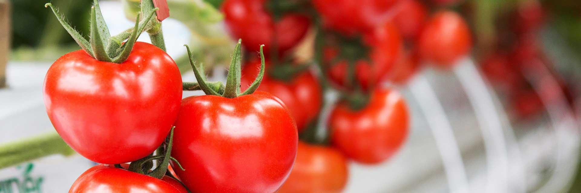 Gemüsebau Steiner lebt Nachhaltigkeit in allen Bereichen