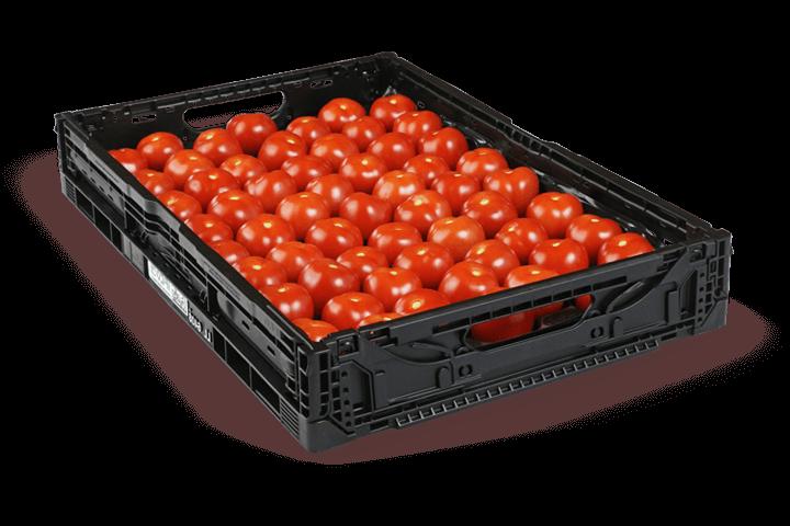 Tomate-Savantas-6kg-Gemuesebau-Steiner_01