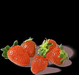 Erdbeeren mit sehr hohen Vitamin C-Gehalt und dem unverwechselbar fruchtigen Geschmack von Gemüsebau Steiner