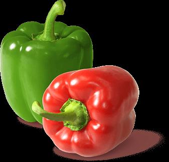 Orange, gelbe, rote und grüne Paprika sowie Spitzpaprika von Gemüsebau Steiner
