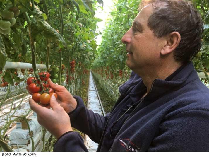 Süddeutsche Zeitung berichtet über Gemüsebau Steiner - Tomaten aus Oberbayern, mitten im Winter und trotzdem CO₂-frei